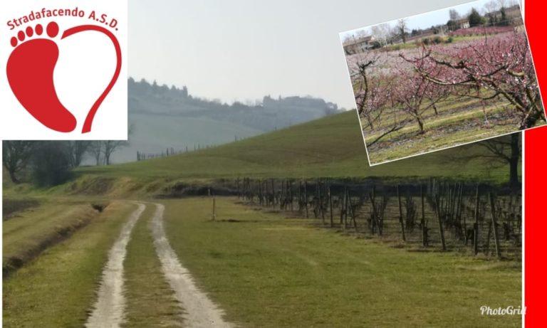 Domenica 24 marzo 2019 – Nordic Walking nelle colline cesenati colorate di primavera